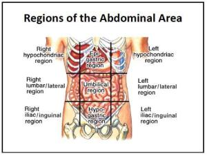 Abdominal-Regions-And-Organs-Regions-of-the-abdominal-area